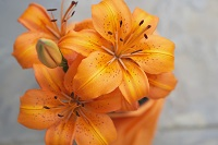 affordable cremation service planning orange flowers